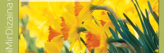 Нарцисс посадка и уход в открытом грунте фото когда сажать