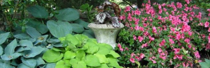 Комнатные цветы растущие в полутени