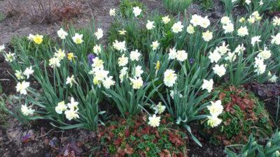 Цветы которые любят тень
