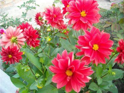 Веселые ребята цветы