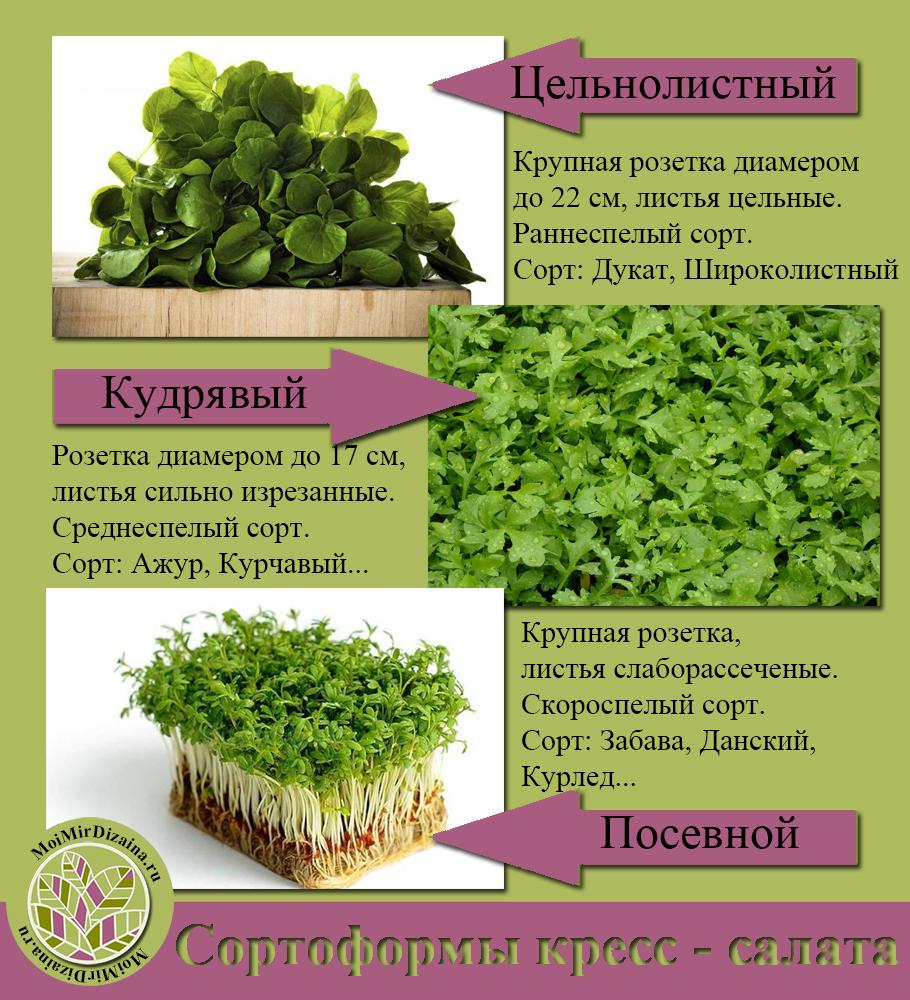 кресс - салат